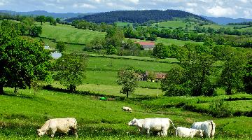 Bocage Bourgogne