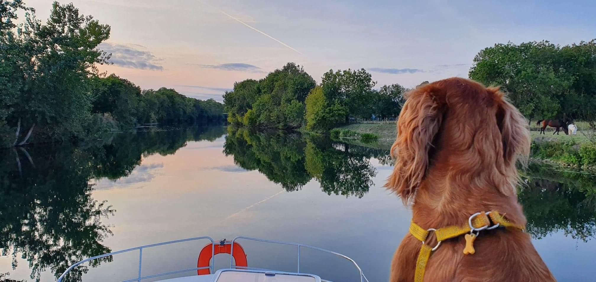 Chien sur le Canal