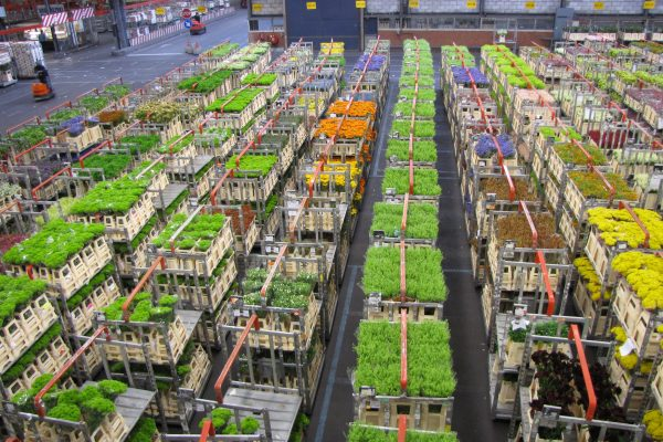 Aalsmeer, son marché aux fleurs