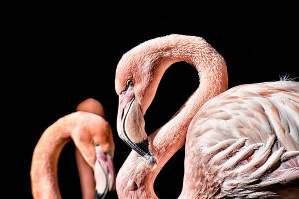 Le parc ornithologique du Pont de Gau