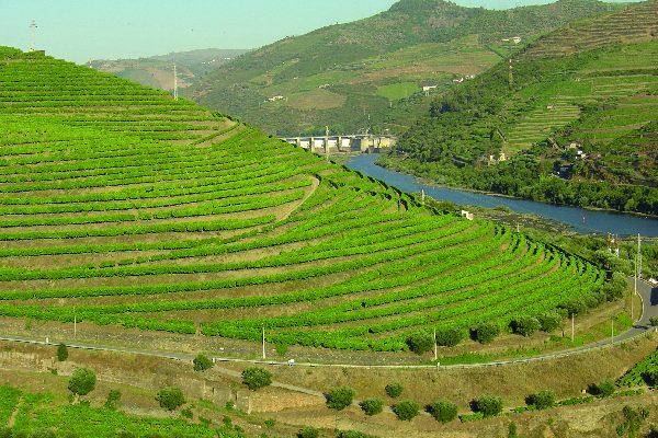 Le haut Douro Viticole
