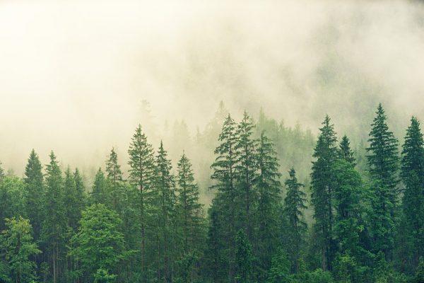 La forêt des Ardennes