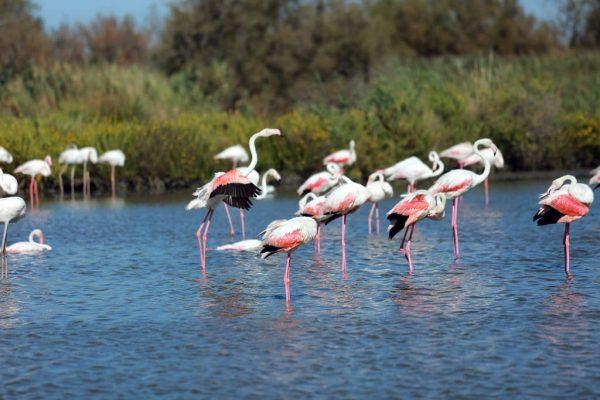 Camargue: Fauna and Flora