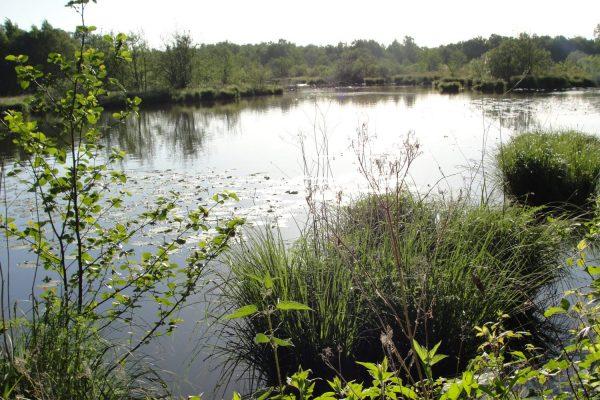 La réserve naturelle de gibiers d'eau de la Truchère